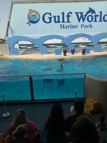 Dolphins waving goodbye