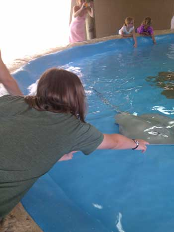 Petting the rays